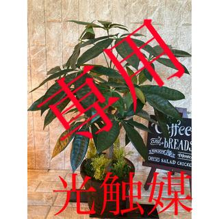 光触媒 人工観葉植物 ウォールグリーン 造花 インテリア