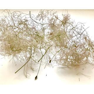 スモークツリー ドライフラワー 花材 ナチュラル(ドライフラワー)