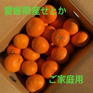 愛媛県産柑橘 せとか 傷モノ 5kg箱(フルーツ)