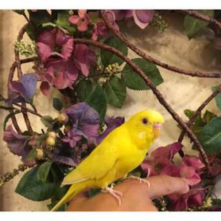 ふぃっしゆ様専用■ 健康 バードフード ■ 3倍長生き⁈ 小鳥のごはん ■   (鳥)