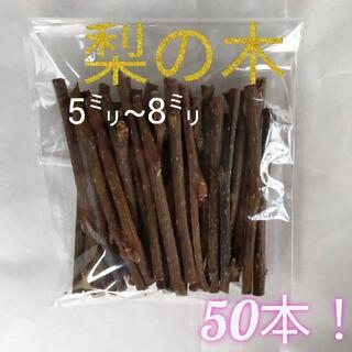 小動物かじり木 梨の木 50本!(小動物)