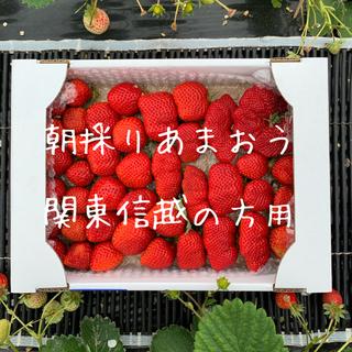 関東信越の方向け 朝採りいちご あまおう 二級品(フルーツ)