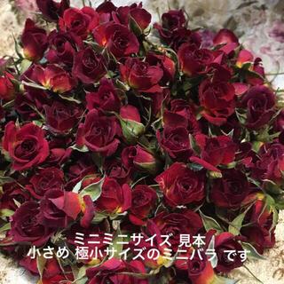 ミニミニ薔薇20輪セット+おまけ2輪付き★ミニバラ ドライフラワー★花材 素材★(ドライフラワー)