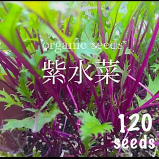 ◆紫水菜◆【栽培簡単で初心者向♡彩り鮮やかアントシアニン等栄養豊富】種子120粒(その他)