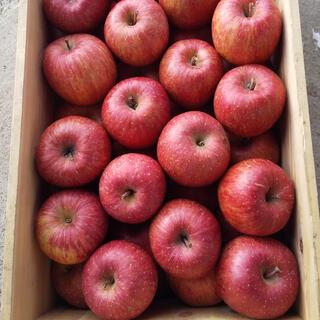 青森県産りんご サンふじ ※小さいサイズ 5キロ(フルーツ)