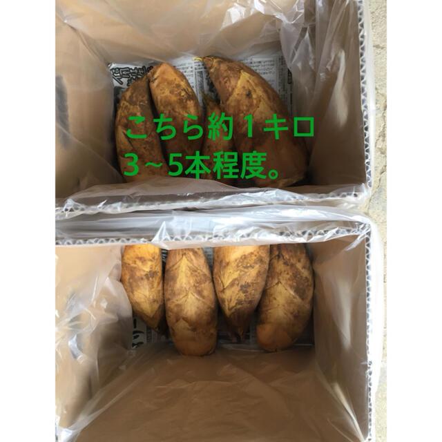 朝掘り たけのこ 1キロ 食品/飲料/酒の食品(野菜)の商品写真