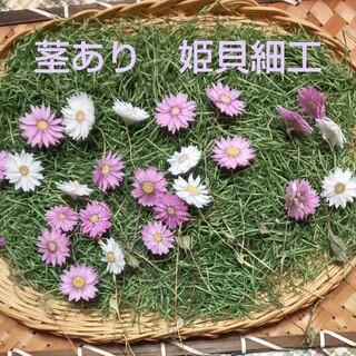茎あり 姫貝細工★スワッグ ブーケ ガーランド オブジェ★ハンドメイド★春 (ドライフラワー)