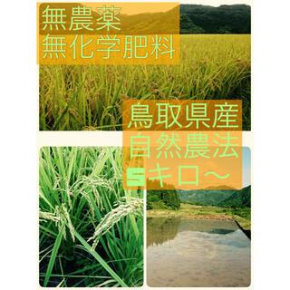 【自然農】無農薬 無化学肥料 鳥取県 きぬむすめ 自然農法(米/穀物)