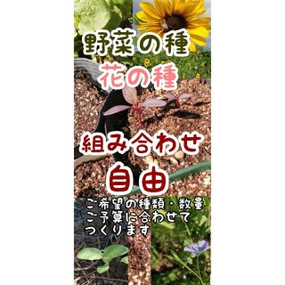 【春蒔き・自然農・自家採取多数あり】野菜の種 花の種 セットにいたします(野菜)