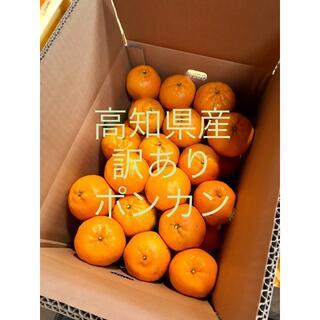 10k 訳ありポンカン(フルーツ)
