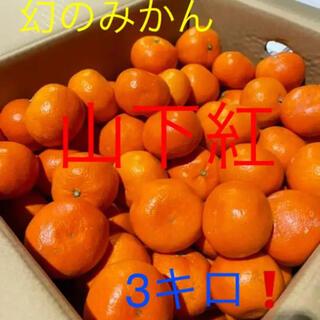 和歌山産 幻の山下紅みかん   3キロ!(フルーツ)