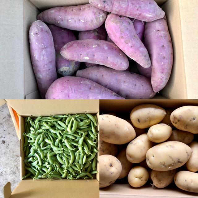 【鹿児島産】甘塩野菜セット3品目^_^ 食品/飲料/酒の食品(野菜)の商品写真