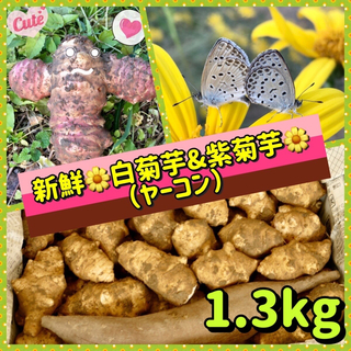 【特選】❤️新鮮・無農薬・自然栽培『白菊芋&フランス紫菊芋』(野菜)