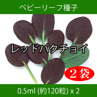 ベビーリーフ種子 B-28 レッドパクチョイ 0.5ml 約120粒 x 2袋(野菜)