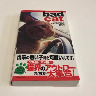 Bad cat : ワルっぷりのイケてるにゃんこ244 帯付き(写真)