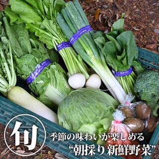 120サイズ【江戸時代から続く伝統農業】松本農園から直送☆旬の野菜詰め合せ