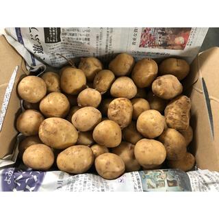 長崎県雲仙ミニじゃがいも1kg(野菜)