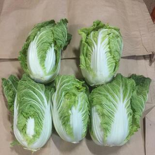 北海道産 白菜 5個(野菜)