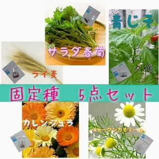 固定種 5点セット❗ 野菜の種 ハーブ 有機種子 家庭菜園 エディブルフラワー(野菜)