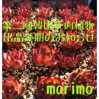 ⭐️お詫び⭐️第二回❣️韓国多肉植物❣️出品延期のお知らせ‼️(その他)