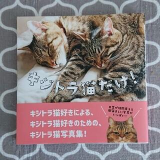 コウダンシャ(講談社)のキジトラ猫だけ! キジトラ ネコ (趣味/スポーツ/実用)