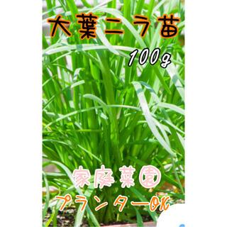 大葉ニラ苗 家庭菜園 100g 節約 プランターOK(野菜)