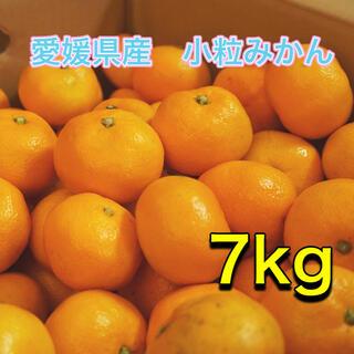 012402 愛媛県産 訳あり みかん 小粒 7kg 西宇和ミカン(フルーツ)