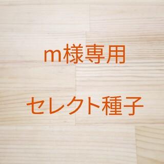m様専用 セレクト種子 6袋(野菜)