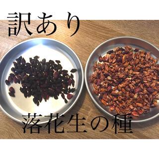 【訳あり】落花生 種 485粒(野菜)