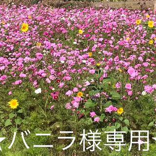 【新品】授乳服アンジェリックニーナ/マタニティー 授乳ワンピース/チュニック/M(マタニティウェア)
