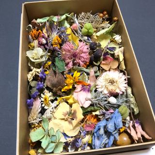 [訳あり品]花材増量パック 小花と花びらと葉と木の実 ドライフラワー C(ドライフラワー)