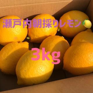 無農薬 レモン 1.2kg 国産 オーガニック