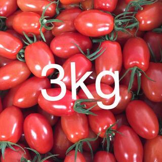 ビジー様 アイコ2kg イエロー、オレンジアイコ1kg(野菜)