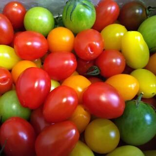 ミニトマトの種 8種類(その他)