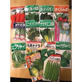 野菜の種 5種類セット(野菜)