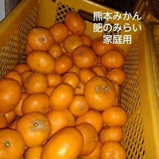 熊本みかん 肥のみらい 5キロ(フルーツ)