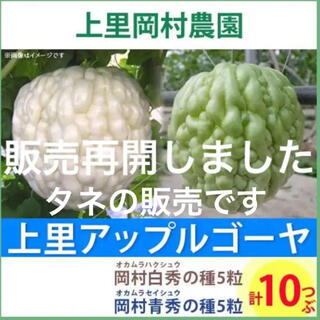 12561 【HT5ST5】上里岡村農園寅さんのアップルゴーヤのタネ10粒セット(野菜)