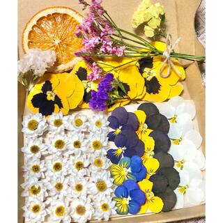 ドライフラワー花材セットNo.89⁑花かんざし❇︎ビオラ❇︎HBスターチス(ドライフラワー)