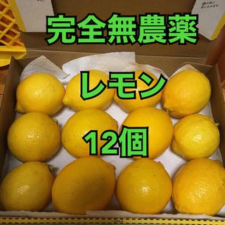 農家直送■完全無農薬レモン12個(フルーツ)