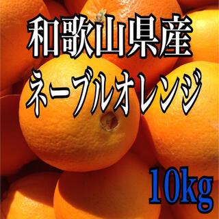 ネーブルオレンジ 10kg 40個前後(フルーツ)