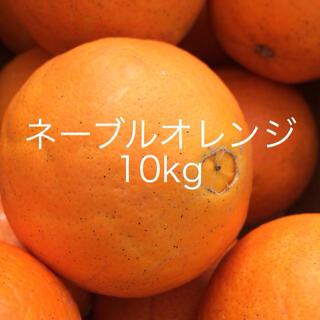 ネーブルオレンジ 10kg 箱込み (フルーツ)