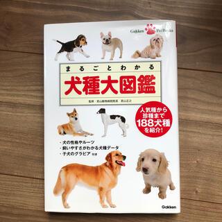 まるごとわかる犬種大図鑑 人気種から珍種まで188犬種を紹介!(住まい/暮らし/子育て)