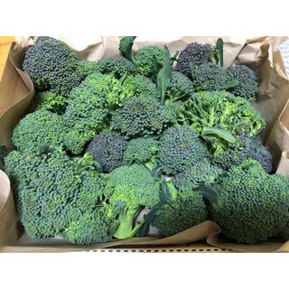 ブロッコリー 愛媛県産 小房 コンパクトボックス(野菜)