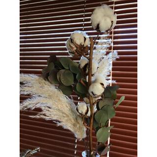 花材 ドライフラワー コットンフラワー ユーカリポポラス  パンパスグラス(ドライフラワー)
