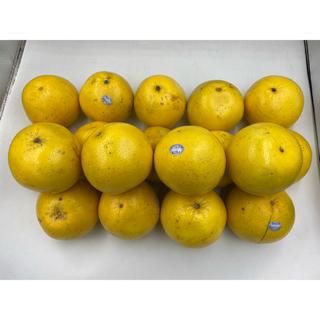 アメリカ産 グレープフルーツ ホワイト 15-18玉 約6kg(フルーツ)