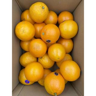 アメリカ産 ネーブルオレンジ 20-23玉 約5kg(フルーツ)