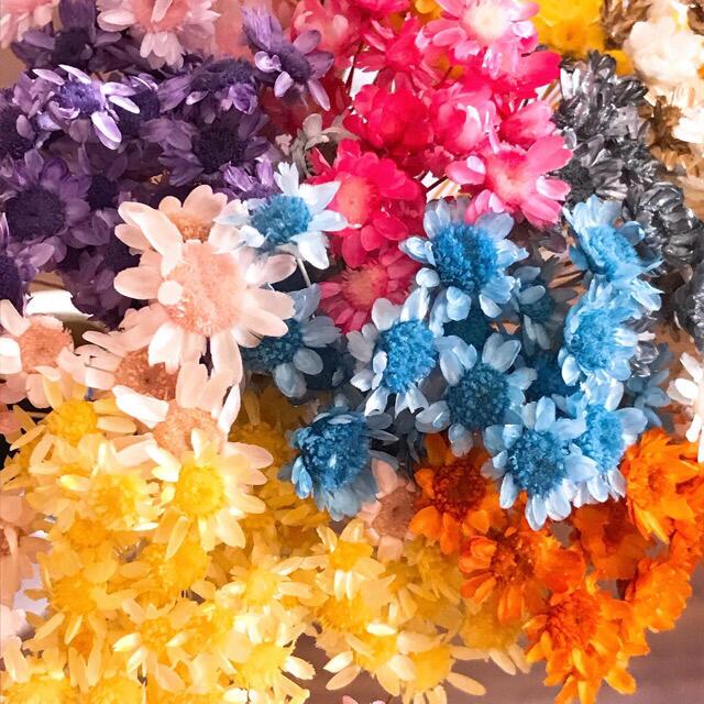 ⑤【訳あり】スターフラワー ブロッサム 270本 ハンドメイドのフラワー/ガーデン(ドライフラワー)の商品写真