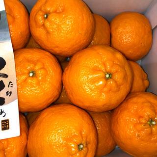 高知県産 立目ポンカン 3L  約5キロ