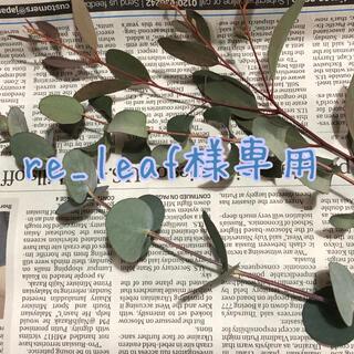 re_leaf様専用ユーカリ(ドライフラワー)