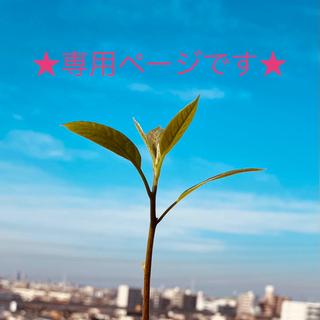 ディーエイチシー(DHC)のDHC幸せの周波数528Hz★心と体にやさしい★(ヒーリング/ニューエイジ)